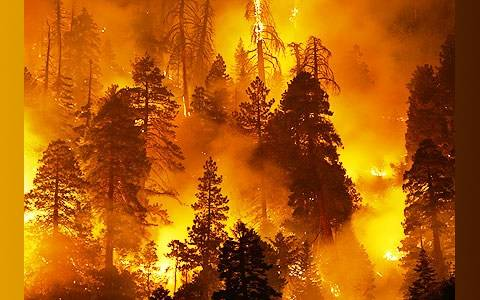 Izsludināts meža ugunsnedrošais periods