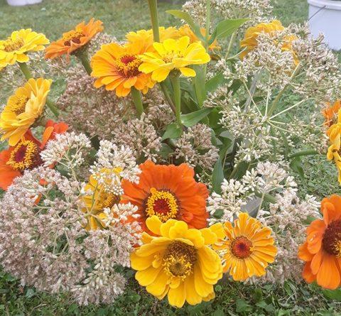 Rudens ziedu izstāde Līksnā no 02.09.2020.- 06.09.2020.