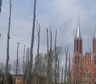 Koku ciršanas publiskā apspriešana